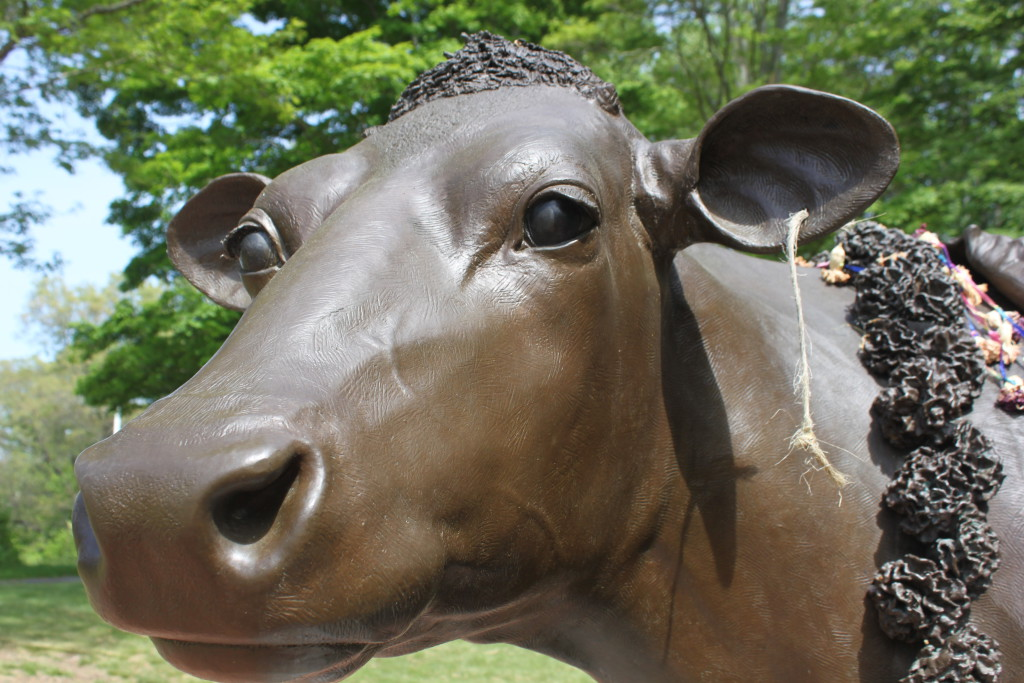 Bronze statue of Emily the Cow at her grave in Sherborn, MA.